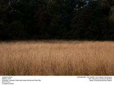 Meadow_GRND