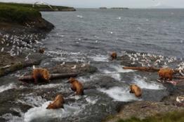 Bears Feasting