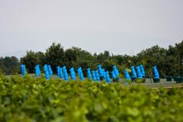 Ca' del Bosco Blue Guardians by Cracking Art