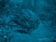 Catherine Wagner Grizzana Landscape (blue) 2016