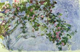 08 Le Rose