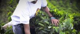 Women's Coffee Project - spot video Colombia