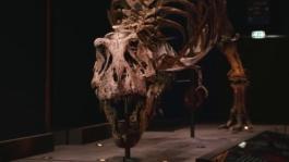 Philips en Naturalis scannen miljoenen jaren oude T. rex Trix