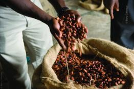 cocoa-beans-packed-in-jute-bags 16729034019 o