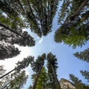Sentiero degli Alberi di Risonanza alberi 5