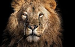carte-blanche-feadship-lion 67645e919b12432e590b303456de6e74