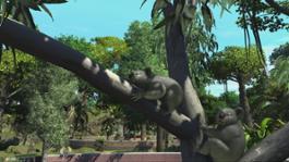 Zoo Tycoon Koalas