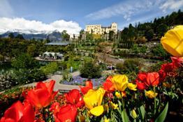 Un mare di tulipani Ai Giardini di Sissi