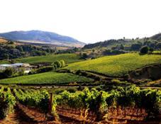 movimento-turismo-del-vino-1
