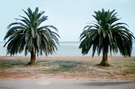 MFolkwang Ghirri Orbetello two palm trees on beach 1974 300