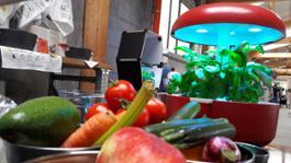 Plantui Italia - In cucina (3)
