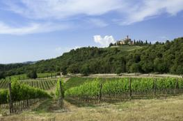 Panorama Castello Banfi photographed by I. Franchini SMALL