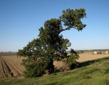 1006 Ariano-nel-Polesine ro Quercia-di-San-Basillio