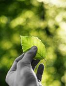 pianca-sostenibilità-02s