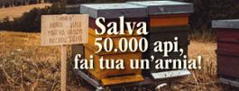 Salva 50.000 api