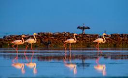 Hamad Al Kulaifi Flamingos 1 QNTC