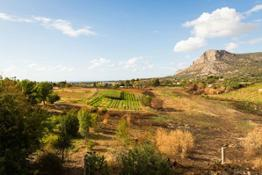 """The creation of a """"food forest"""" reproducing the natural eco-system in Sicily 573523"""