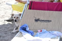 Adriano Camping Village - pet
