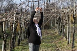 CdE Azienda Vitivinicola Santa Clelia Piemonte Erbaluce Vino