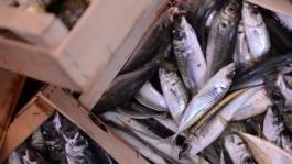 L'imperdibile Asta del pesce a Slow Fish 2015